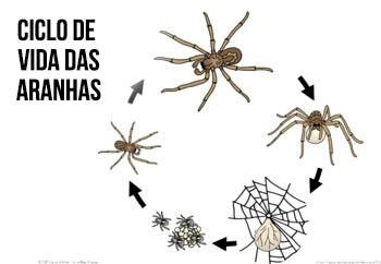 Ciclo de vida das aranhas