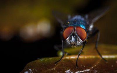 Controle de mosca doméstica: Como proceder?