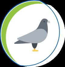 Manejo de Pombos - TAPPA - sistema contra Pombos