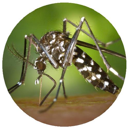 Dedetização de mosquitos em Cuiabá – Mato Grosso