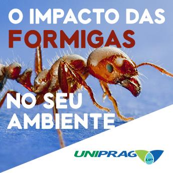 Guia Completo do Controle de Formigas