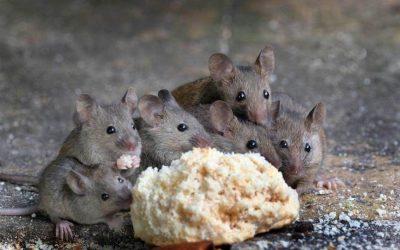 Dedetizadora de Ratos: Qual É o Valor do Serviço?