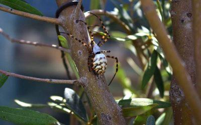Dedetização de aranhas: como escolher uma dedetizadora?