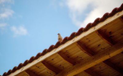 Dedetização de pombos: doenças causadas pelas aves