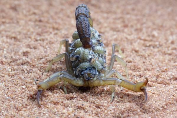 Dedetização de escorpiões: evite que essas pragas entrem no seu lar!